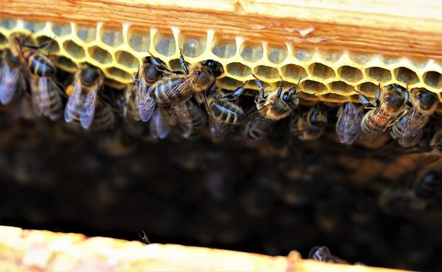Bienenzucht